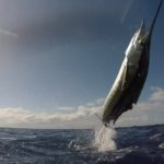 2020 Reef Cup - Ken Hendrick - Sailfish action