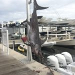 2020 - 440lb Swordfish caught by Keith St Germain on Paydirt