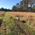 2020 - Letty & Ignacio Borbolla - Quail Hunting with Granddaughters in Sheldon, SC - 2